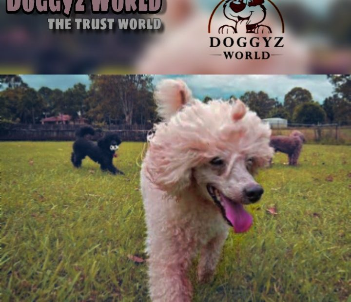 http://doggyzworldkennel.com/wp-admin/post.php?post=713&action=edit