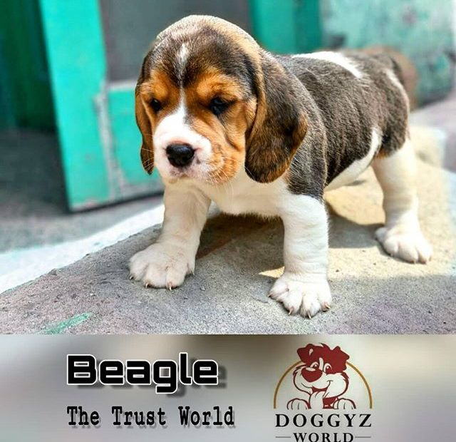 http://doggyzworldkennel.com/wp-admin/post.php?post=780&action=edit